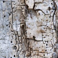 Holz I